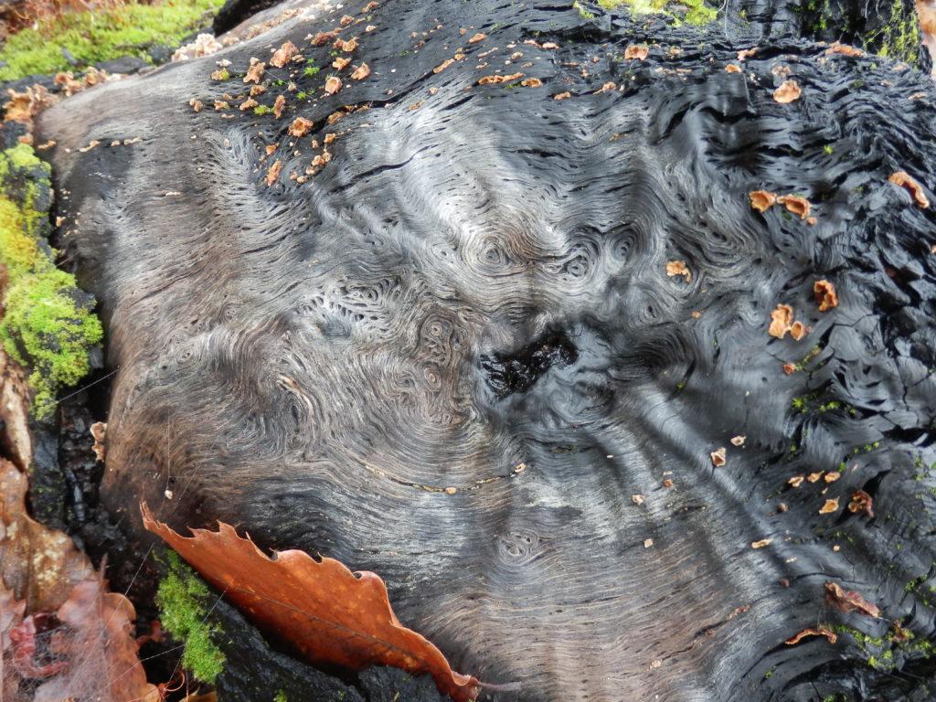 Les champigons, richesse de la forêt