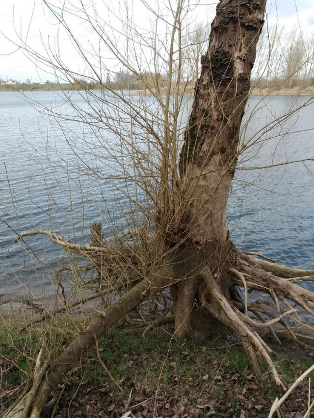 Bois Chétif, forêt alluviale des bords de Loire